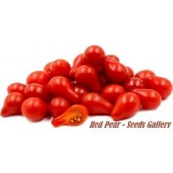 Red Pear Kruska Paradajz Seme