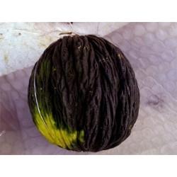Semi di melone nero