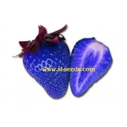 """Graines de Fraise Bleue OGM """"African Blue"""""""