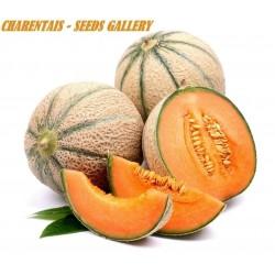 Semi Di Melone Charentais