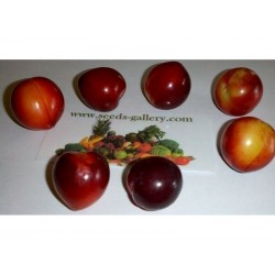 Semillas de Mirobolano (Prunus cerasifera)