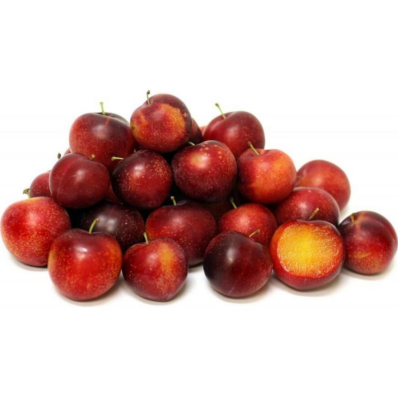 Körsbärsplommon Frön (Prunus cerasifera)