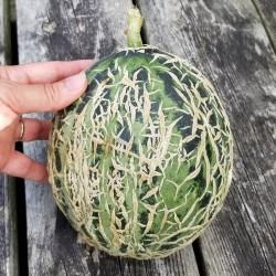 Graines de Melon Casca de...