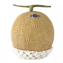 Semena Shizuoka Crown Melounů
