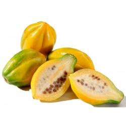 Mountain papaya Seeds...