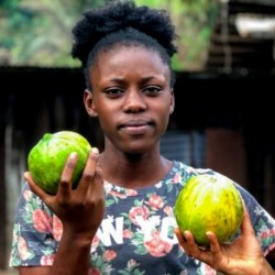 Semillas de Carica papaya...
