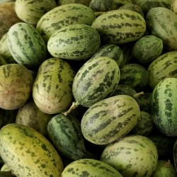 Wild Melon Seeds Cucumis...