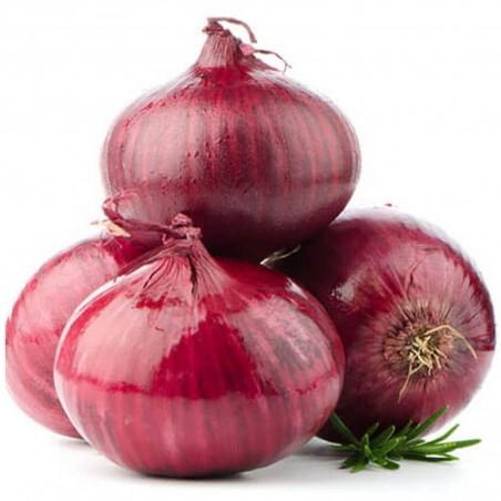 Sementes de cebola roxa Ptujski Luk