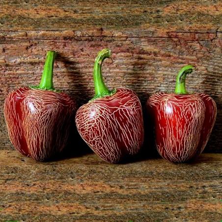 Semena chilli papriček Dieghito Jalapeno