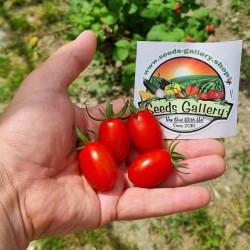 Sementes de tomate cereja...