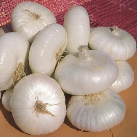 Bianca di Maggio Onion Seeds