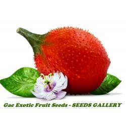 Semillas de Gac Fruit (Momordica cochinchinensis)