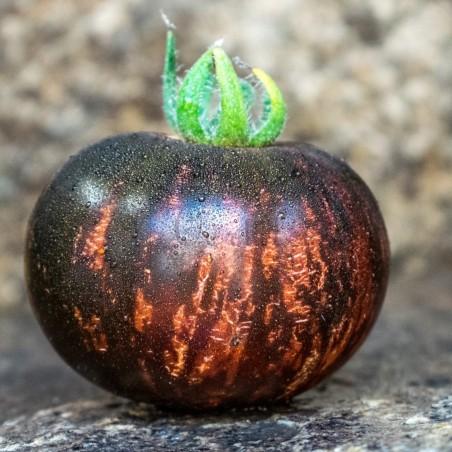 Nasiona Pomidora Królowej Nocy
