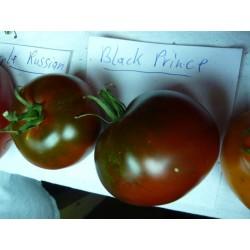 Semillas de Tomate Príncipe Negro