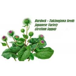 Burdock – Takinogawa Seeds Japanese Variety