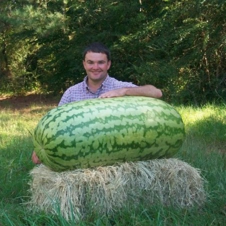 Obří semena melounu
