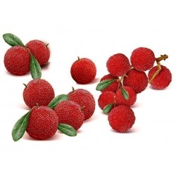 Graines de fraise chinoise Japanese Bayberry Red Bayberry