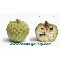 Σπόρος Αννώνη η φολιδωτή (Annona squamosa)