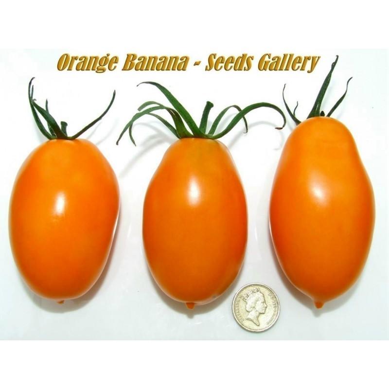 Sementes De Tomate Banana Laranja