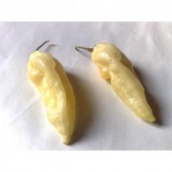 """Chili Seme """"FATALII White"""""""