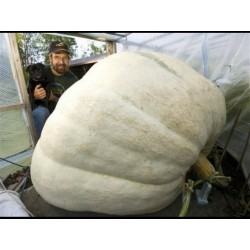 Giant White Pumpkin Seeds Lumina