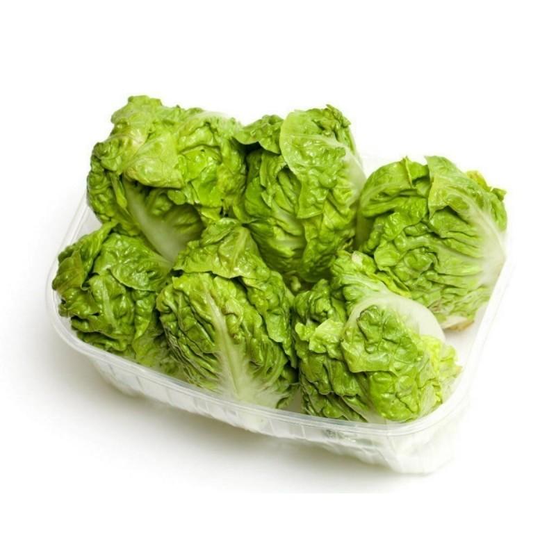 Salata Seme ``Great Lakes 118``