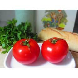 Graines de Tomate Marglobe