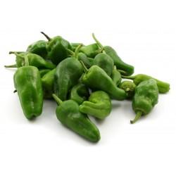 Seme Ljute Chili Papricice PADRON