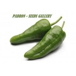 Chili Samen PIMIENTO DE PADRON