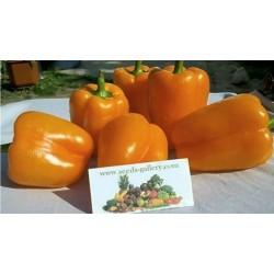 Graines De Poivron Doux Orange Sun