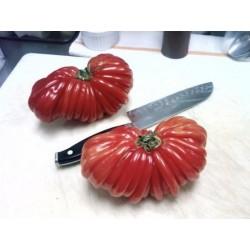 Semillas de tomate Pink Accordion