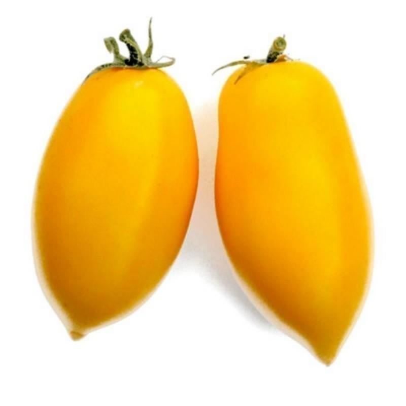 Semi di pomodoro ROMAN CANDLE