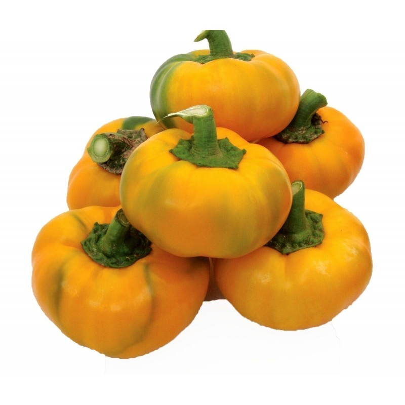 Seme Slatke Paprike ROTUND Zuti