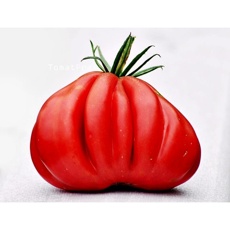 Graines de Tomate Gros Fruits TLACOLULA RIBBED