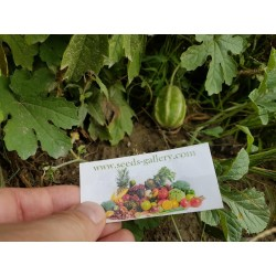 West Indian Gherkin Cucumber Seeds