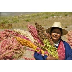 Kinoa Seme Crvena ili Bela (Chenopodium quinoa) - popularna lekovita biljka