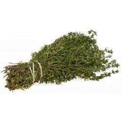 Semillas de Tomillo (Thymus vulgaris)