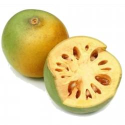 Bengalische Quitte - Beli Samen