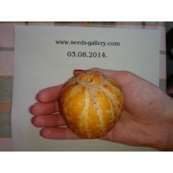 Semi di Cetriolo Crystal Lemon