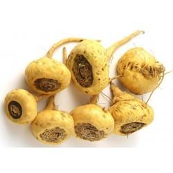 Semi di Maca (Lepidium meyenii)