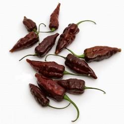 Fatalii Choco Chili Seeds