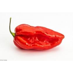 Semi Peperoncino Devils Tongue Red