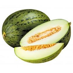 Piel de Sapo Honigmelone Samen (Cucumis melo)