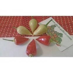 Weiße Chili Samen SPEER