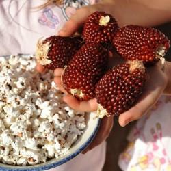 Erdbeere Popcorn Mais Samen