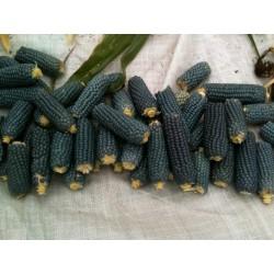 Semillas De Maiz Azul Palomitas