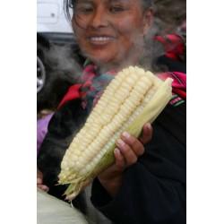 Giant Vit Corn Cuzco Frön