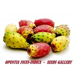 Indian fig Cactus seeds (Opuntia Ficus-Indica)
