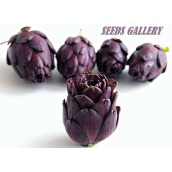 Semi di Carciofo Violet de Provence