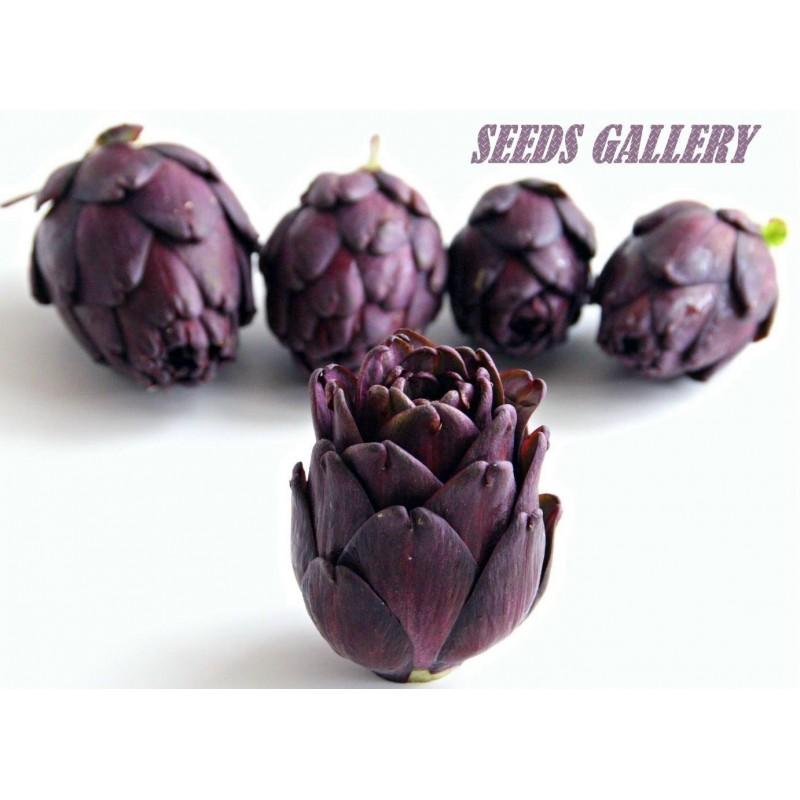 Graines Artichaut Violet de Provence